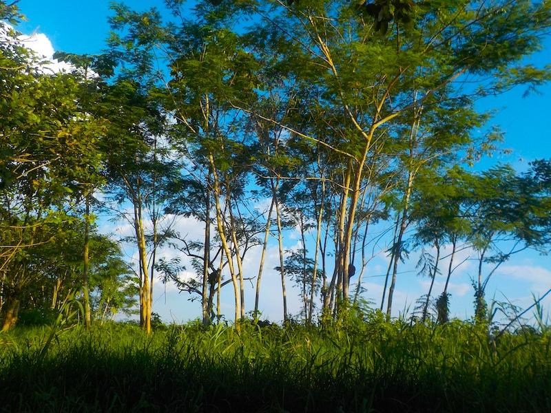 Wetter Kolumbien Amazonas