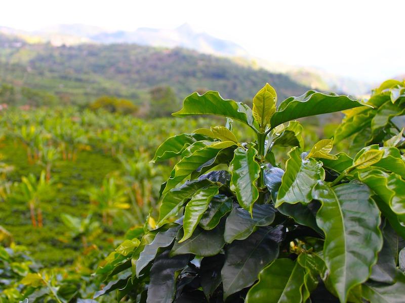 Kolumbien Mietwagenreise Kaffeeregion