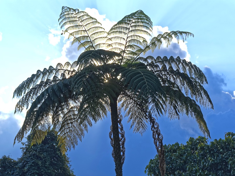 Kolumbien Rundreisen Palmental