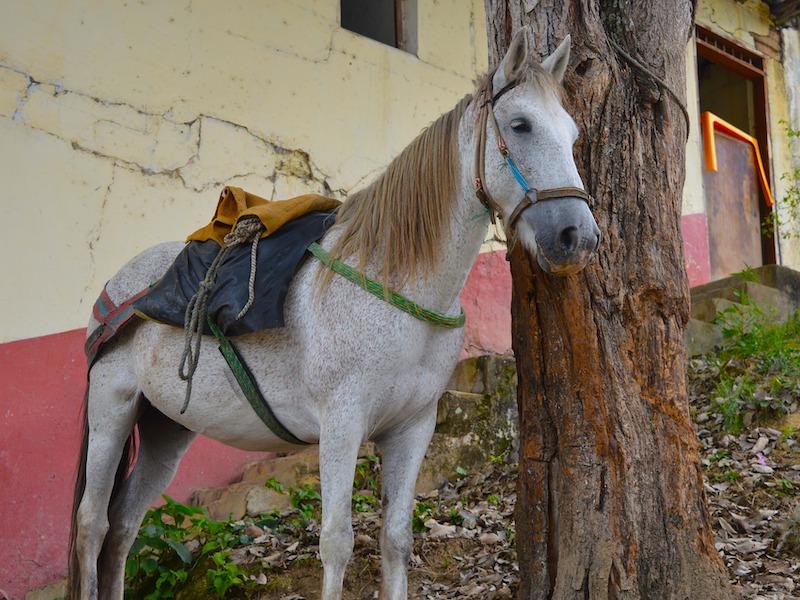 Los Llanos Kolumbien Pferd