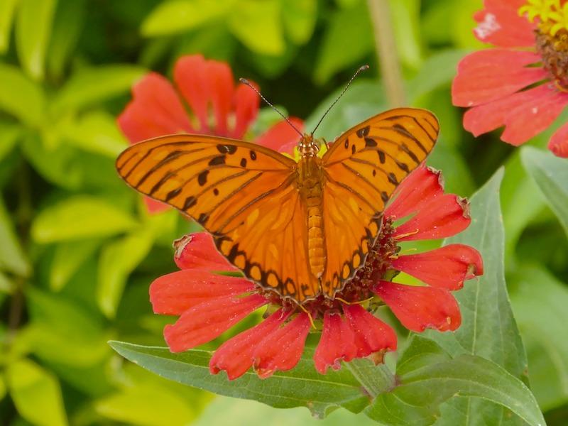 Kolumbien Rundreisen Schmetterlinge