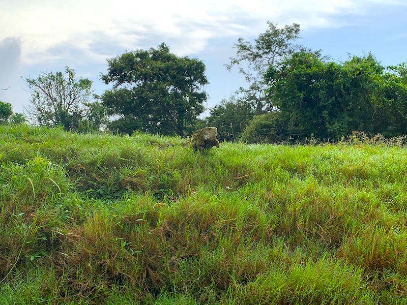 Amazonas Trekking